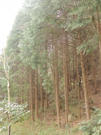 a0960_005520桧林